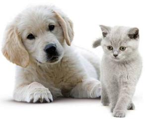 Site de rencontre chien et chat